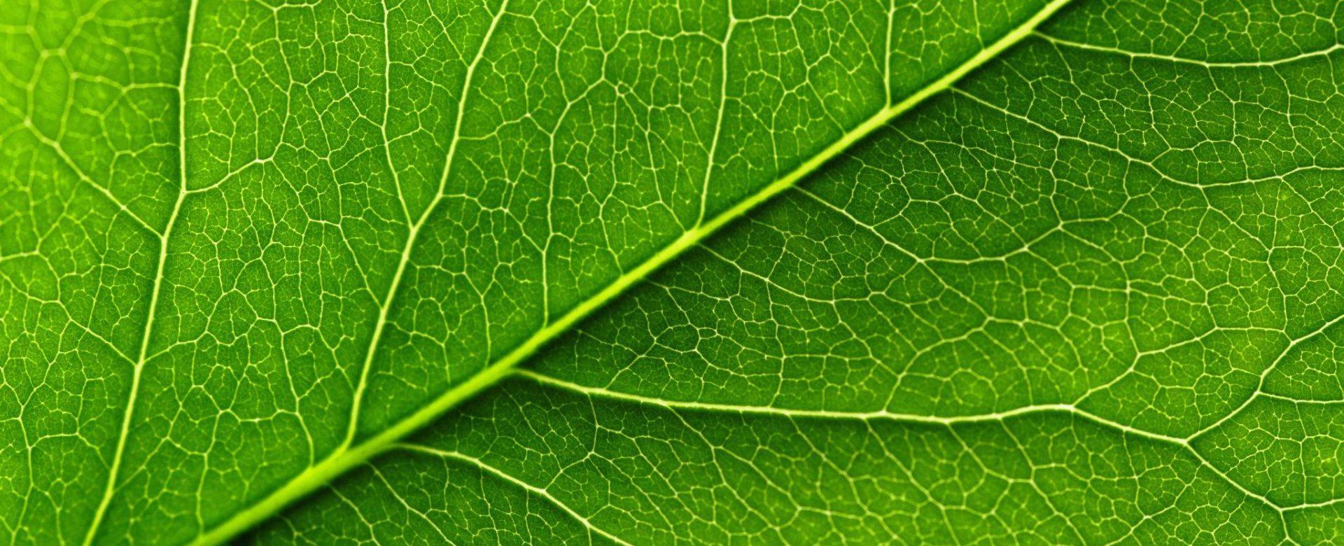 2-cnnct leaf